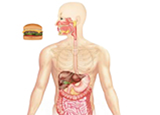 Laboratory Diagnosis of Food Poisoning
